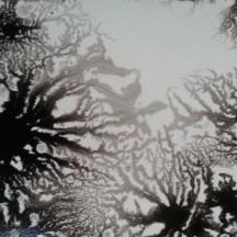 Wet 11, 2012-14, digital print